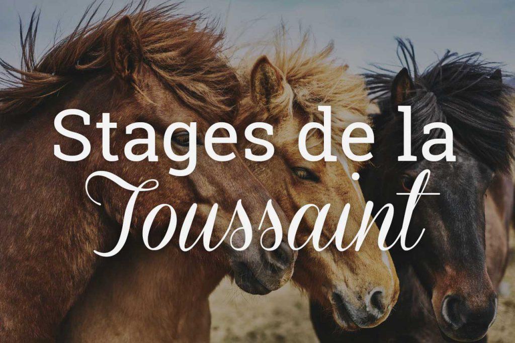 Stages d'équitation de la Toussaint